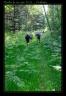 Marche / randonnée du 1er juin 2014 - Parfondru (3)